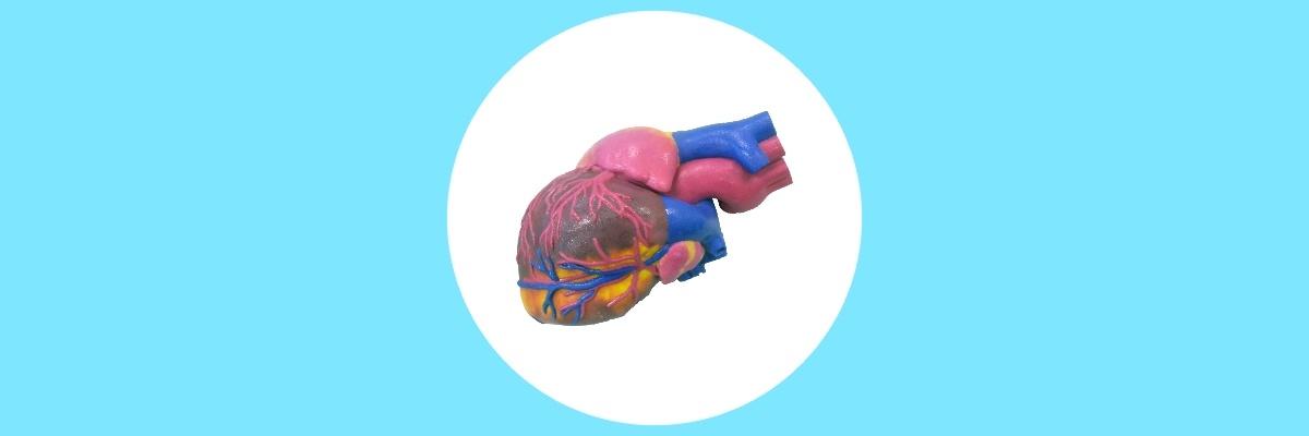 3D Printed biomedical Heart Model